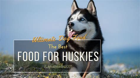 best food for huskies ultimate food the best food for huskies updated 2017 hi5dog
