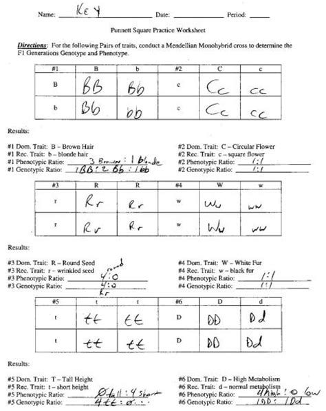 Punnett Square Problems Worksheet by Genetics Practice Problems Worksheet Lesupercoin