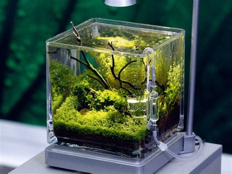 design aquarium nano 17 images about aquascape s on pinterest gardens tree