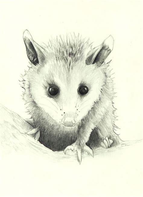 opossum clipart 49 best possum images on clip
