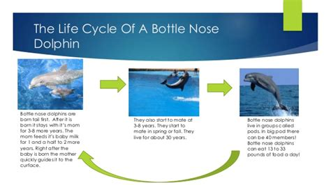 bottlenose dolphin cycle diagram bottlenose dolphins