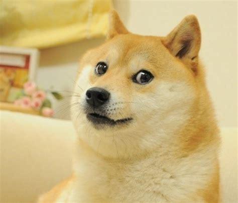 Doge Original Meme - original doge meme 28 images doge on pinterest doge