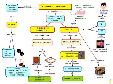 tecnologo alimentare roma 2 176 il sistema immunitario benvenuti su profwaltergalli