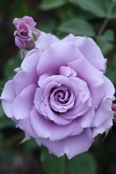 Fleur Violette by Les Plus Belles Fleurs Violettes En Beaucoup D Images