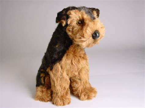 airedale puppies airedale terrier puppy 2219 airedale terriers dogs