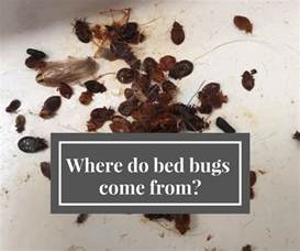 where do bed bugs come from bugco pest houston