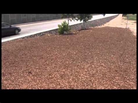 cascara de nuez incrementar 225 servicios p 250 blicos esparcimiento de cascara de nuez en camellones de avenidas youtube
