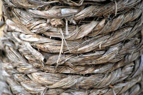 Hemp Rope Tali Rami Tali Goni vikings cultivated cannabis ancient origins