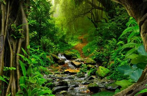 amazon forest interesting amazon rainforest facts serious facts