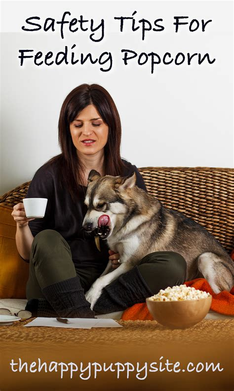 dogs eat popcorn can dogs eat popcorn a popcorn and dogs safety guide from the happy puppy site