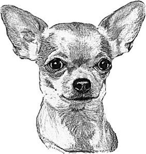 Home Design Drawing Canine Portraits By The Pooka