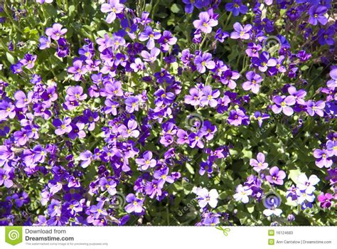 Small Purple by Bright Background Of Small Purple Flowers Stock Photos