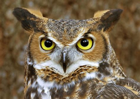 12 mysterious facts about owls mysterious facts