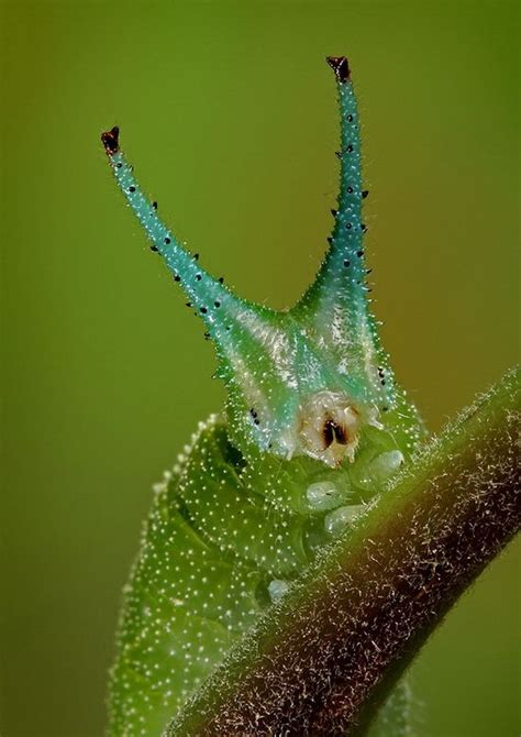 Amazing Beetles 5760 best amazing insects images on butterflies a bug s and beetles