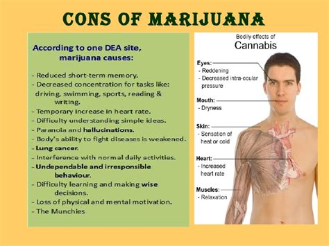 Legalization Of Drugs Essay by Legalization Of Drugs Pros And Cons Essay Drugerreport732 Web Fc2