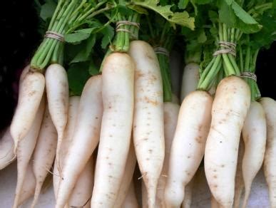 l like vegetables daikon radish transplanting traditions