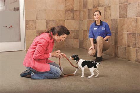 free puppy classes at petsmart image gallery petsmart