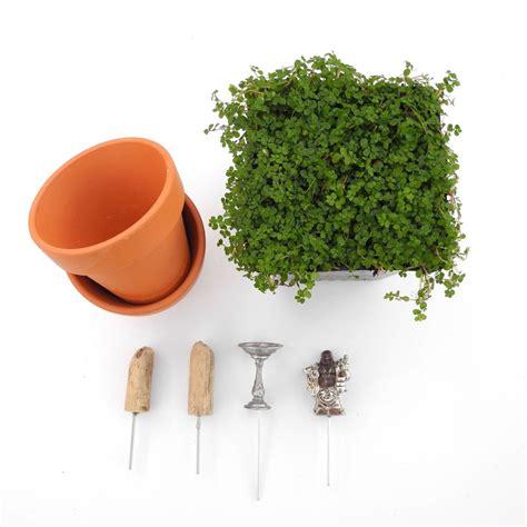 miniature garden diy kit  mini zen gardens  buddha