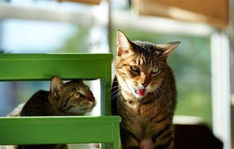 wallpaper green stool kote house cats
