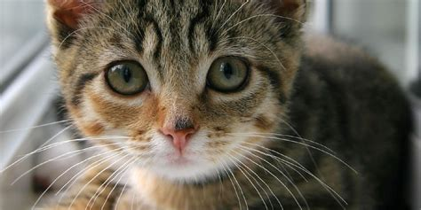 is food bad for cats 6 human foods you should never feed your cat huffpost