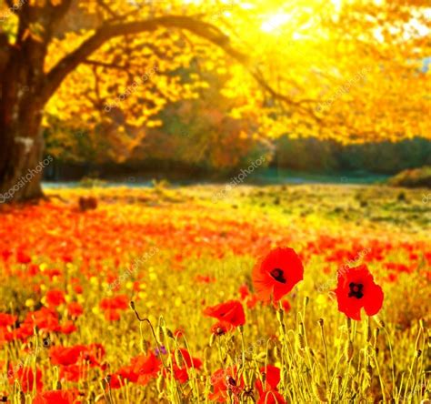 alberi con fiori paesaggio con papaveri fiori e alberi con leav giallo