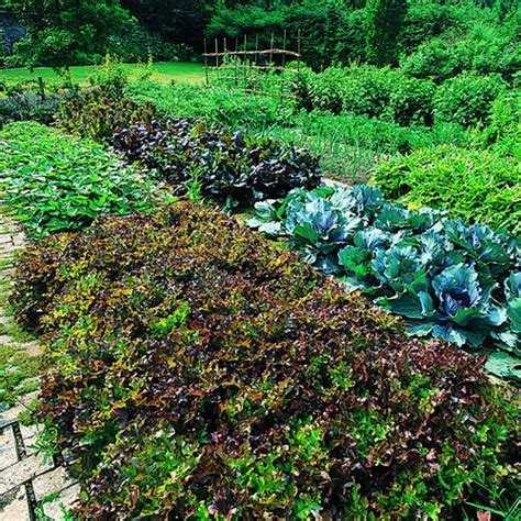 Where To Grow Your Vegetables Sunset Best Location For Vegetable Garden