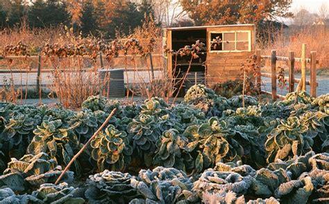 gardeners guide  growing winter vegetables telegraph