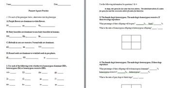Practice Punnett Squares Worksheet With Answers by Punnett Square Practice Wor By The Science