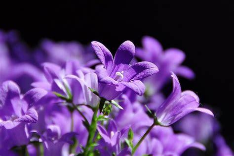fiori colore viola t s eliot poesie giovanili e disperse il sasso nello