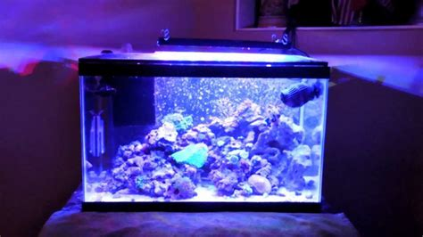 nano reef light fixtures nano reef light fixtures 10 gallon nano reef diy sump