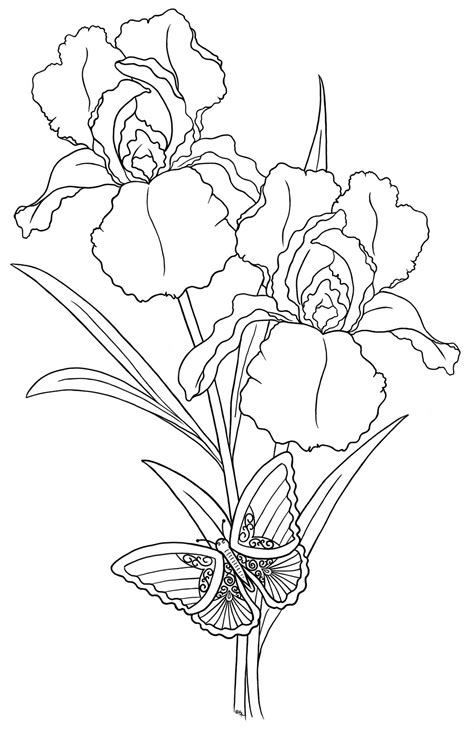 daffodils coloring pages and flower coloring pages on