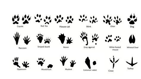 tattoo animal tracks 7 best animal foot prints images on pinterest animal