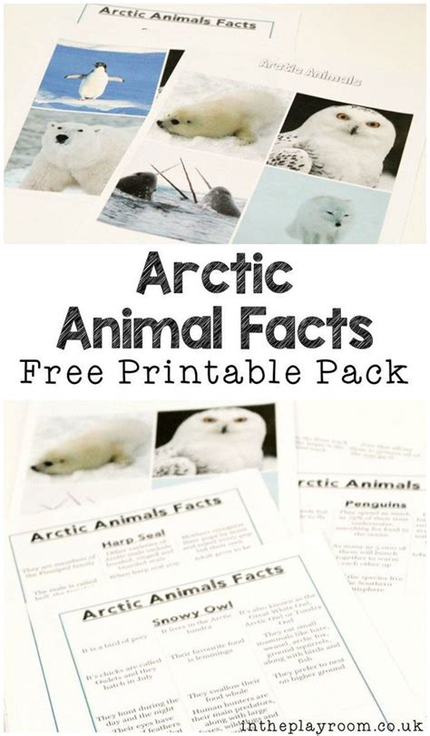 printable animal fact sheets polar animals fact sheets and games to play with them