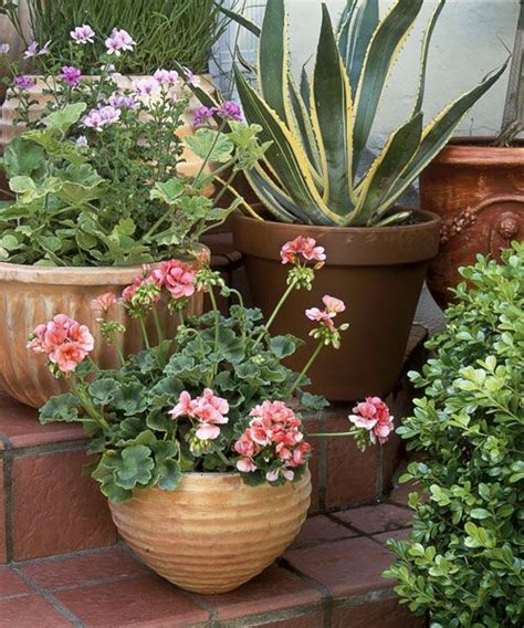 15 Best Images About House Plants On Pinterest Aloe Vera Potted Plant Garden Ideas