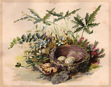 vintage clip art darling nest  eggs