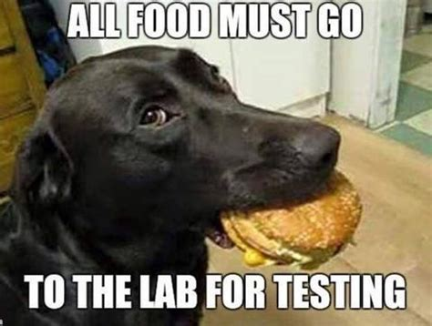 Funny Dog Pictures Memes - dog meme monday funny dog memes treats for dogs