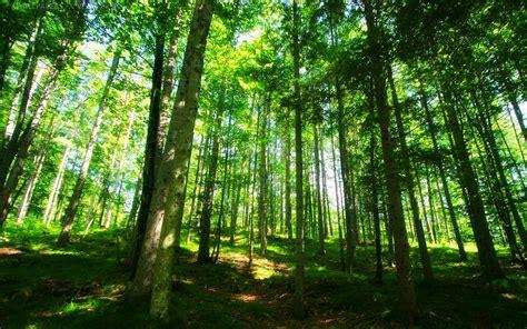 wallpaper lingkungan alam gambar pemandangan hijau yang indah toko fd flashdisk