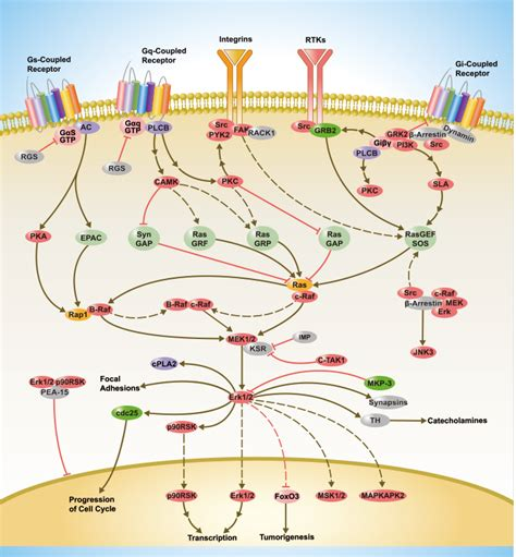 G Protein coupled Receptors Signaling | SinoBiological G Protein Coupled Receptors Pathway