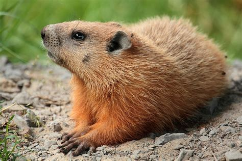 groundhog day hd groundhog