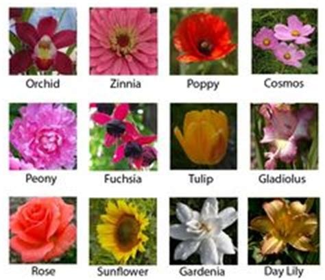 most popular flowers 1000 images about flowers on pinterest most popular