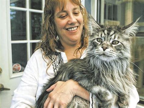 Nevada feline certified as longest domestic cat ever