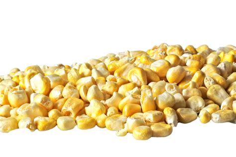 freeze dried corn factory china freeze dried corn factory