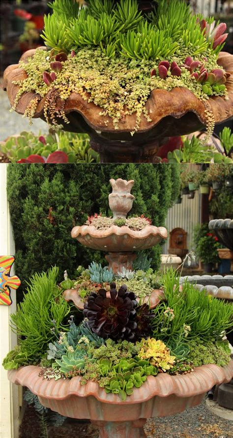plant beautiful succulent gardens   easy steps