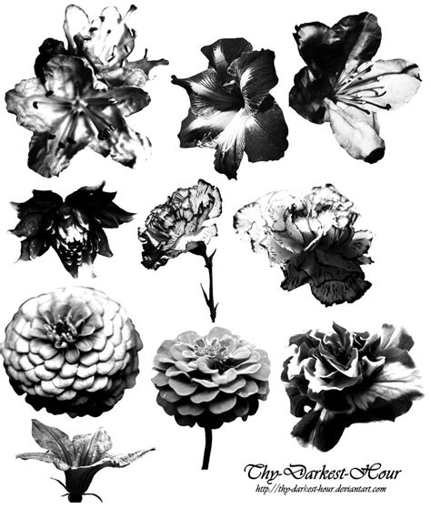 flower brush flower brush set 01 by thy darkest hour on deviantart