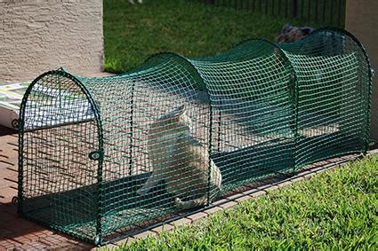 How To Build A Cabana Cat Enclosures Lovetoknow