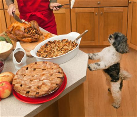 can you give dogs turkey can dogs eat turkey bones a vet weighs in