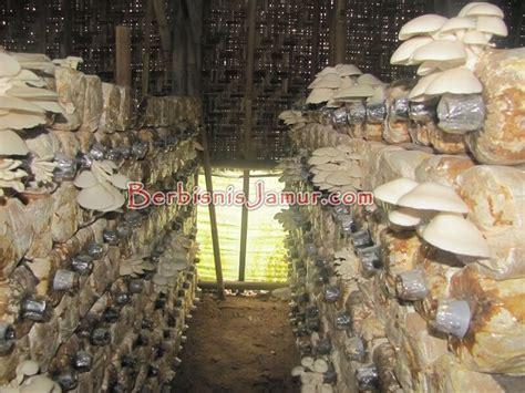Bibit Jamur Tiram Palembang aktivitas jamur angkatan 39 berbisnis jamur