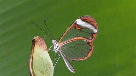 3 photo de jardin des papillons grevenmacher tripadvisor