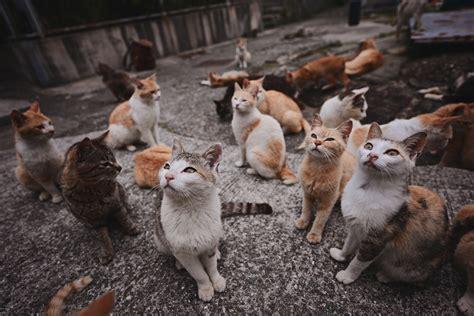 aoshima cat island 青島 aoshima the cat island mark liddell