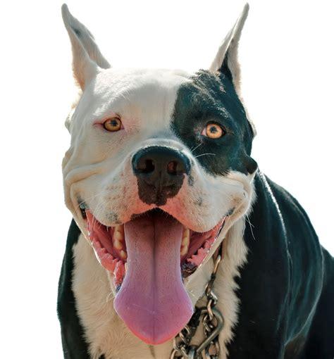excessive panting in excessive panting in dogs